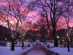 Boston rosa